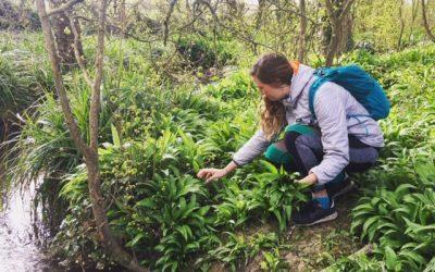 Wild Green Pesto – Spring